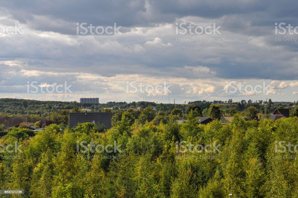 forest in Aalborg Denmark stock photo