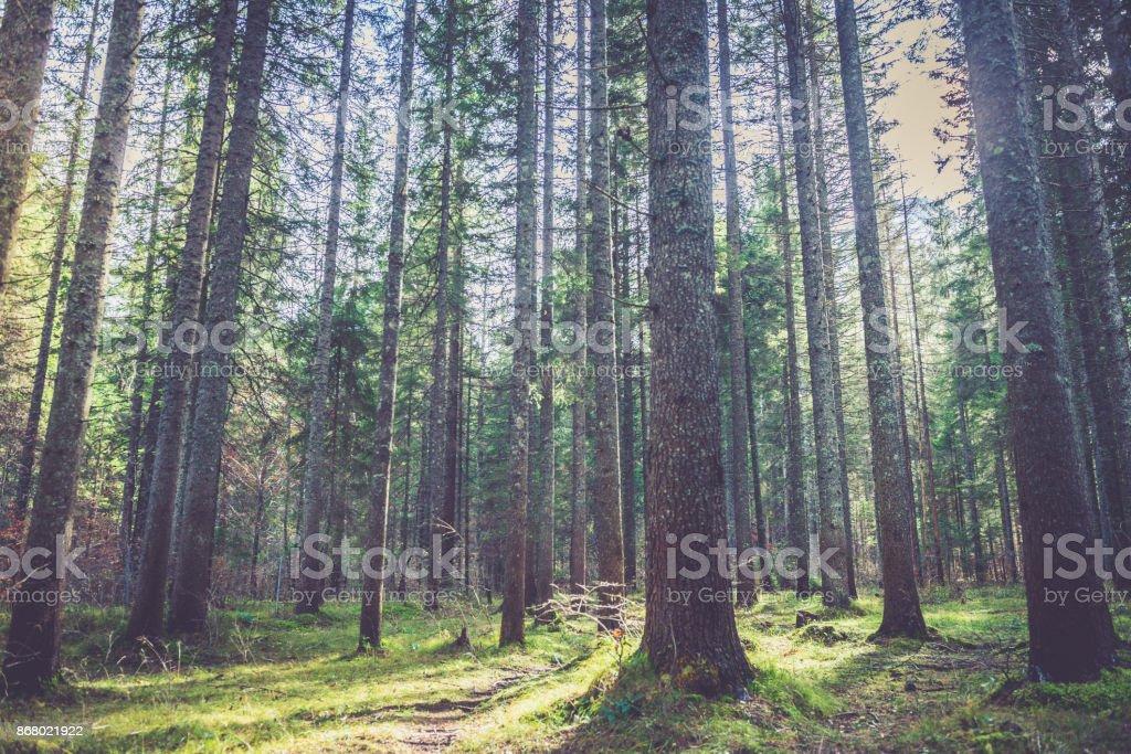 Bosque en alpes - foto de stock