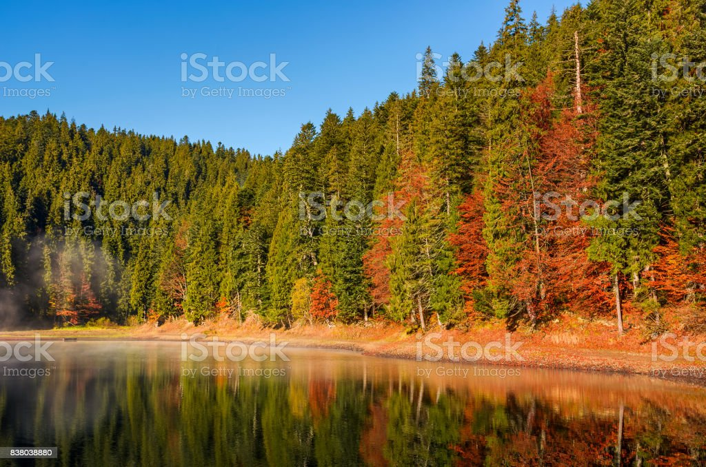 forest in autumn morning mist on the lake stock photo
