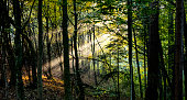 Forest in autumn morning