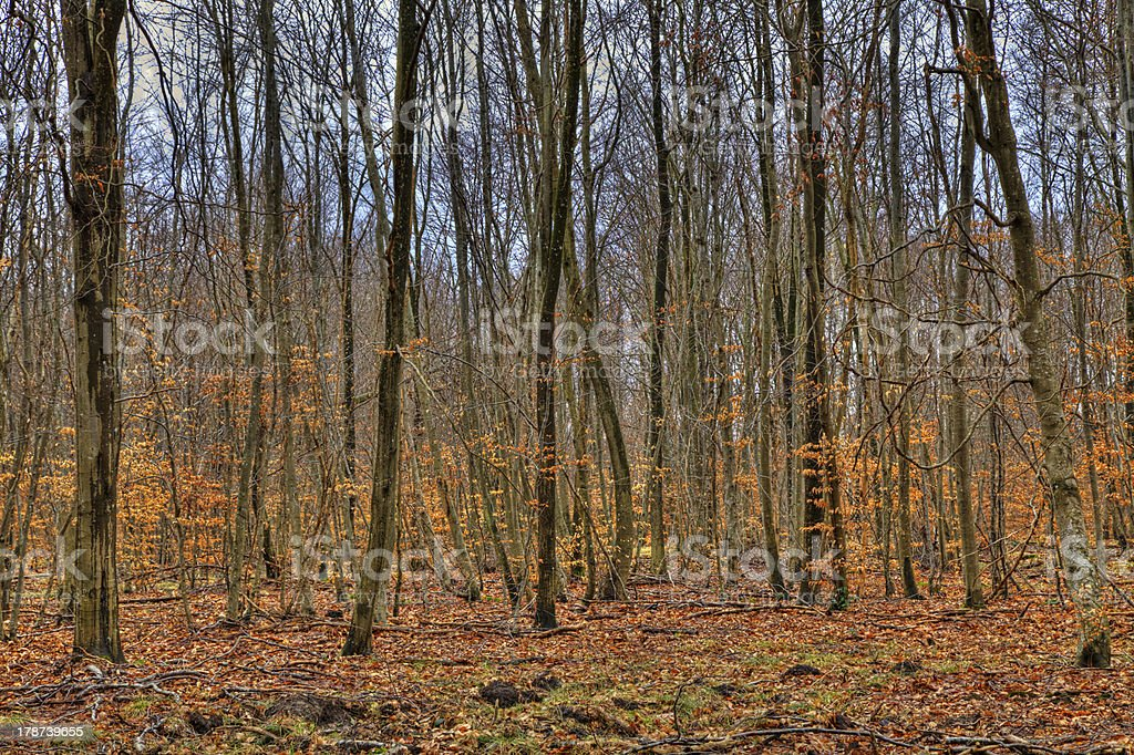 Forest in Autumn stock photo