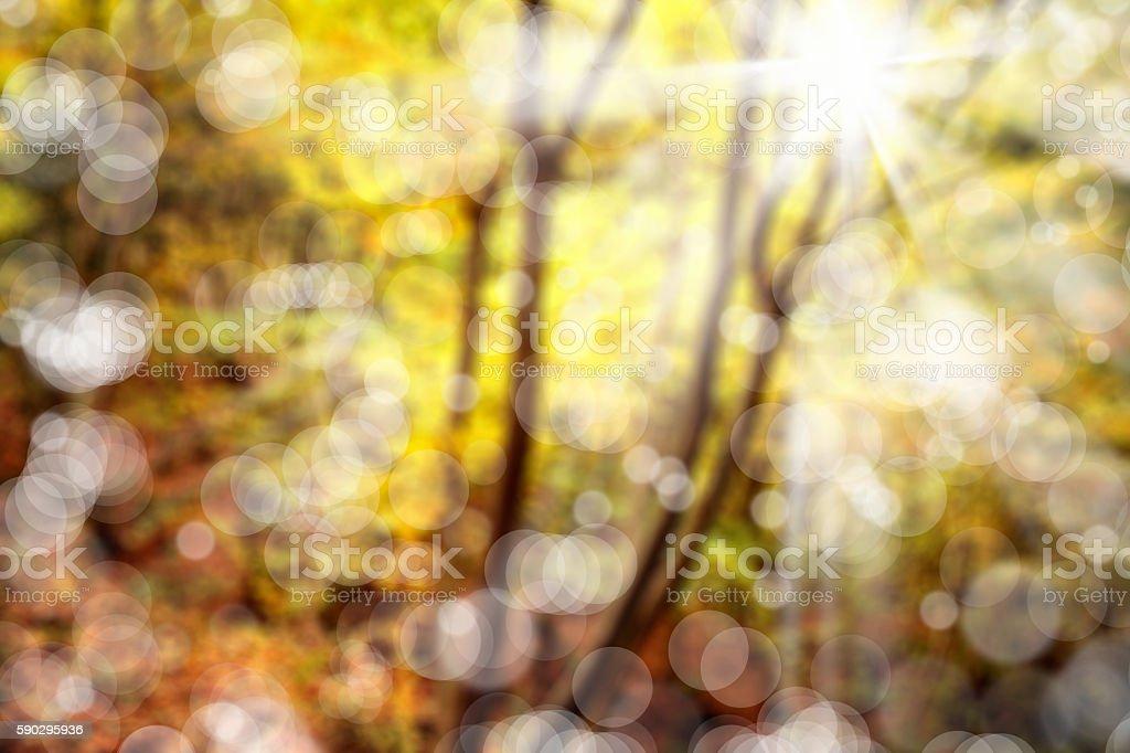 forest in autumn royaltyfri bildbanksbilder