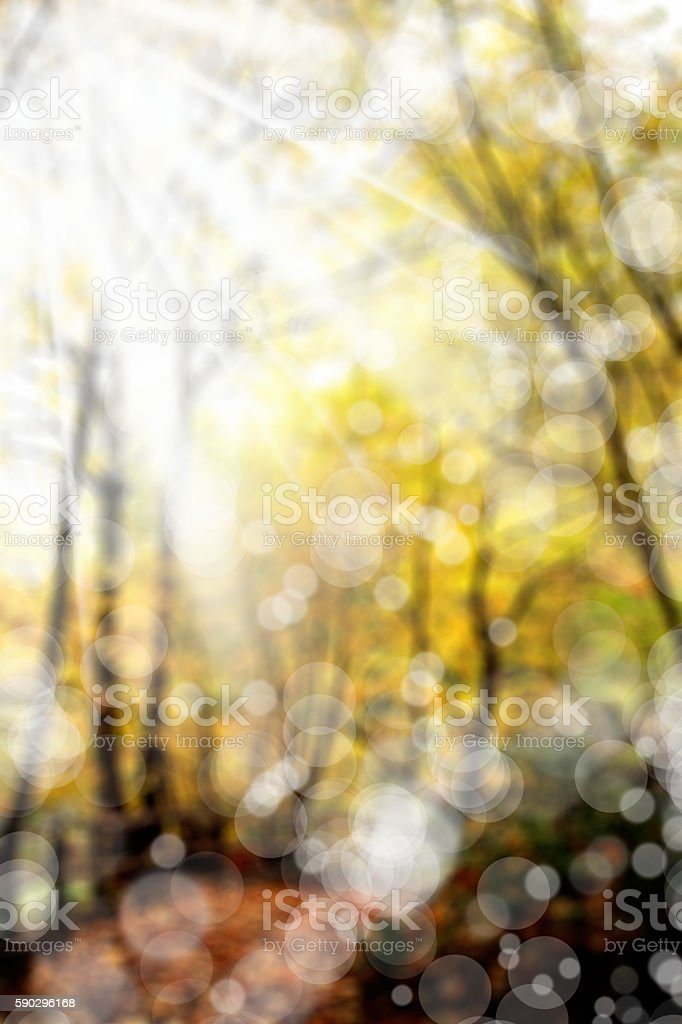 forest in autumn royaltyfri bildbanksbilder