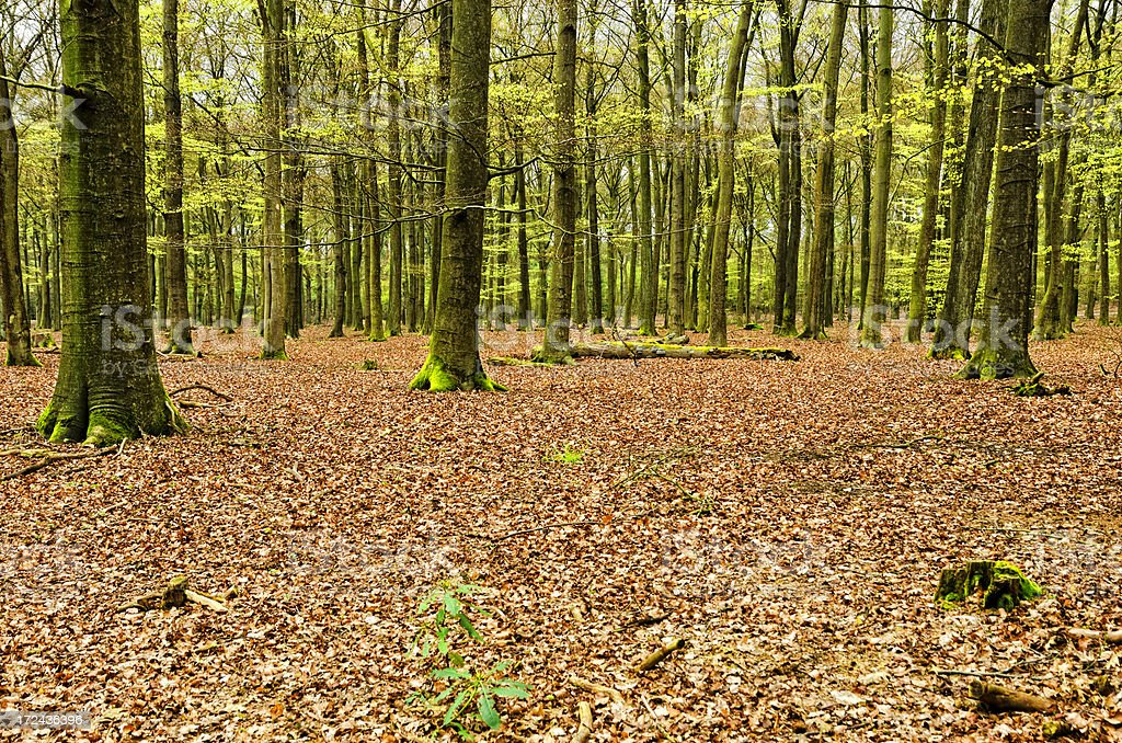Forest in autumn segment royalty-free stock photo