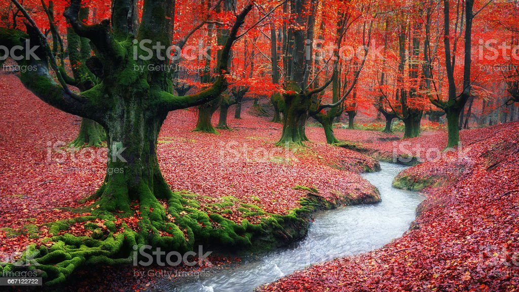 forest in autumn with a stream - foto de stock