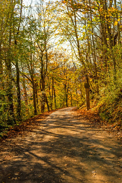 Forest in autumn with calvary way in light and shadow stock photo