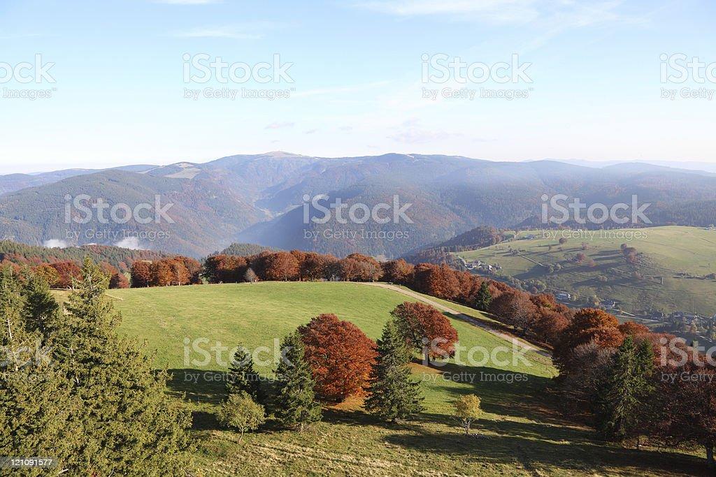 Wald im Herbst mit Wiese, Wald Tanne und Buche – Foto