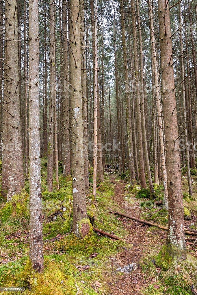 Forest in Berchtesgadener Land, Germany stock photo