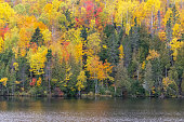 forest in Canada, during the Indian summer, beautiful colors of the trees