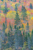 A forest in Canada, during the Indian summer, beautiful colors of the trees