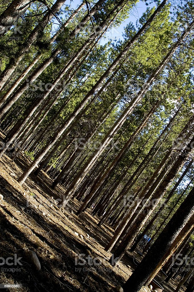Forest in Colorado stock photo