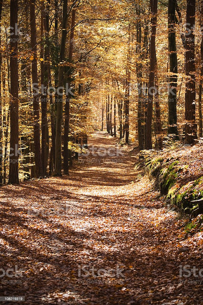 Forest in fall royalty-free stock photo
