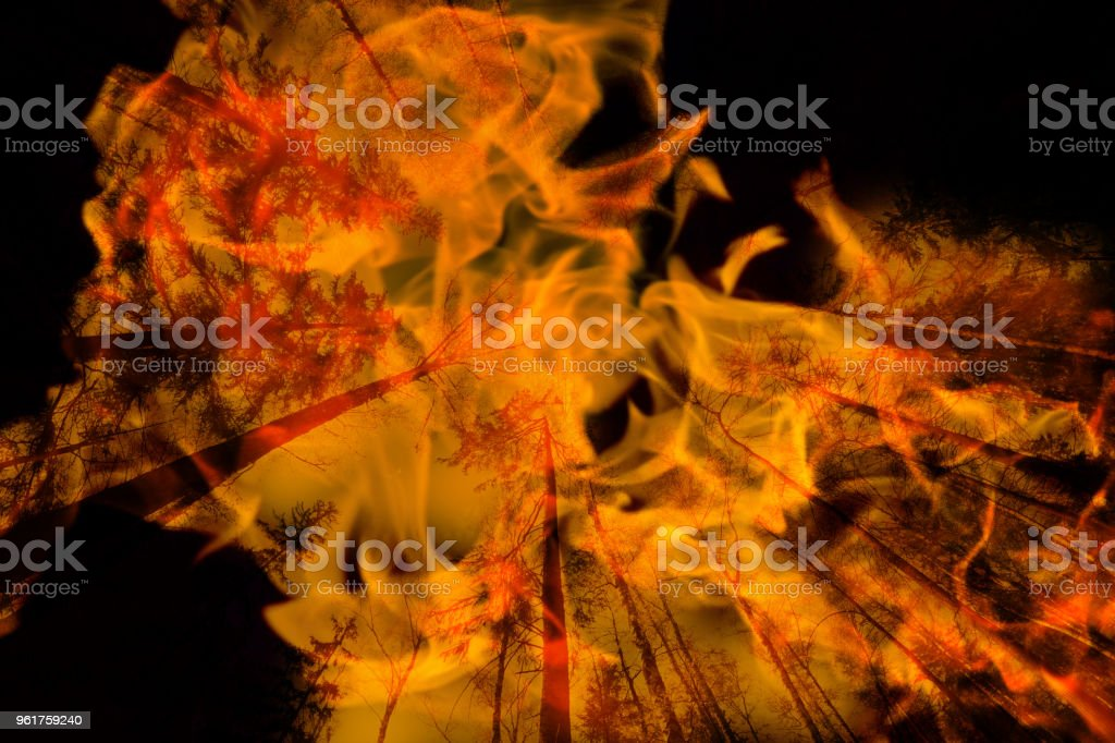 forest in fire. double exposure