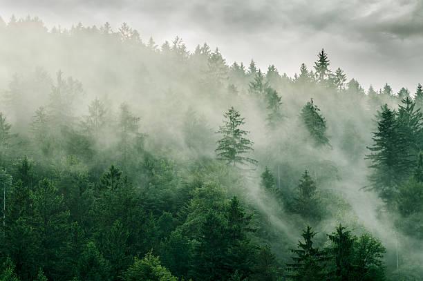 Forêt de brouillard - Photo