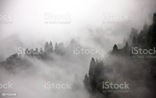 Forest In Fog Stock Photo - Download Image Now