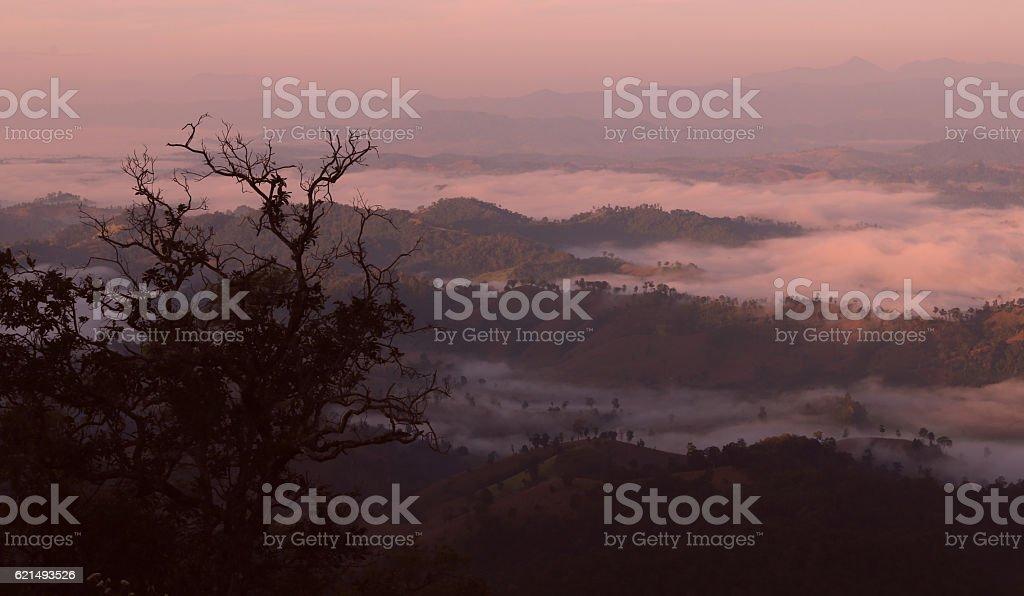 Foresta nella nebbia  foto stock royalty-free