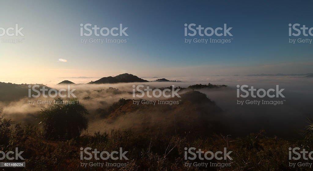 Forêt de brouillard  photo libre de droits
