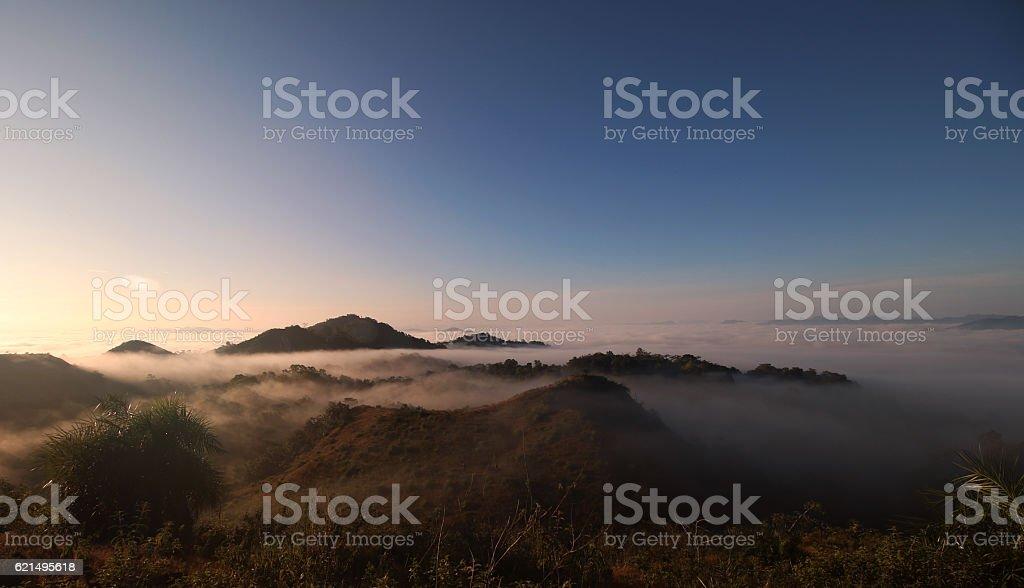 Wald im Nebel  Lizenzfreies stock-foto