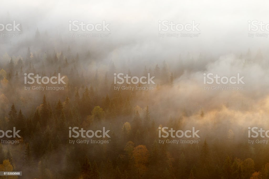 forest in fog, russian nature, forest mist stock photo