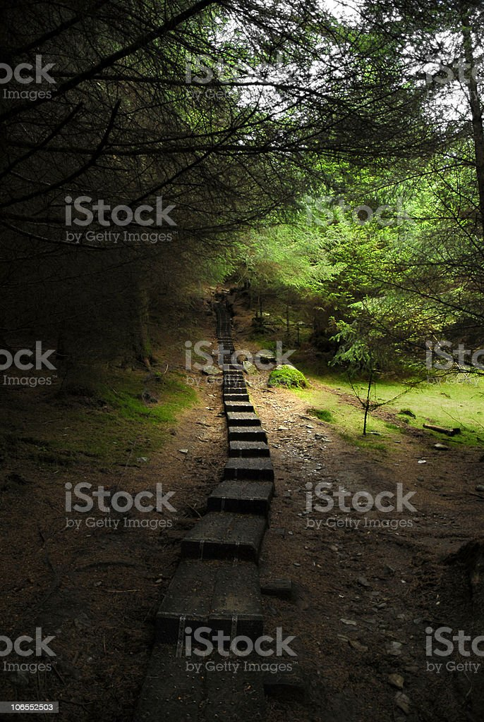 forest in Glendalough royalty-free stock photo