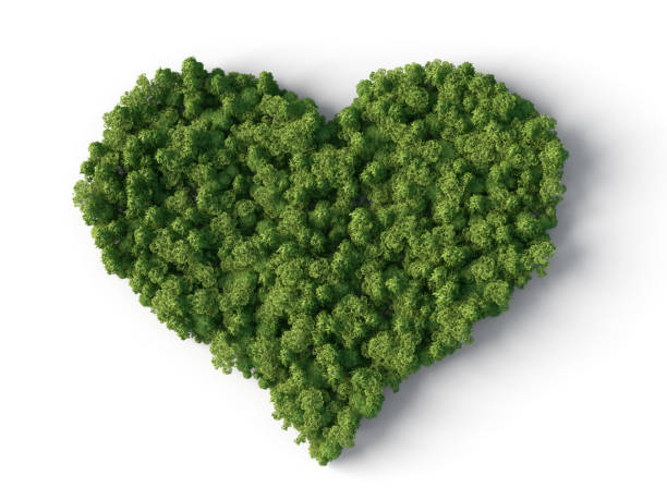 Forest in heart shape stock photo