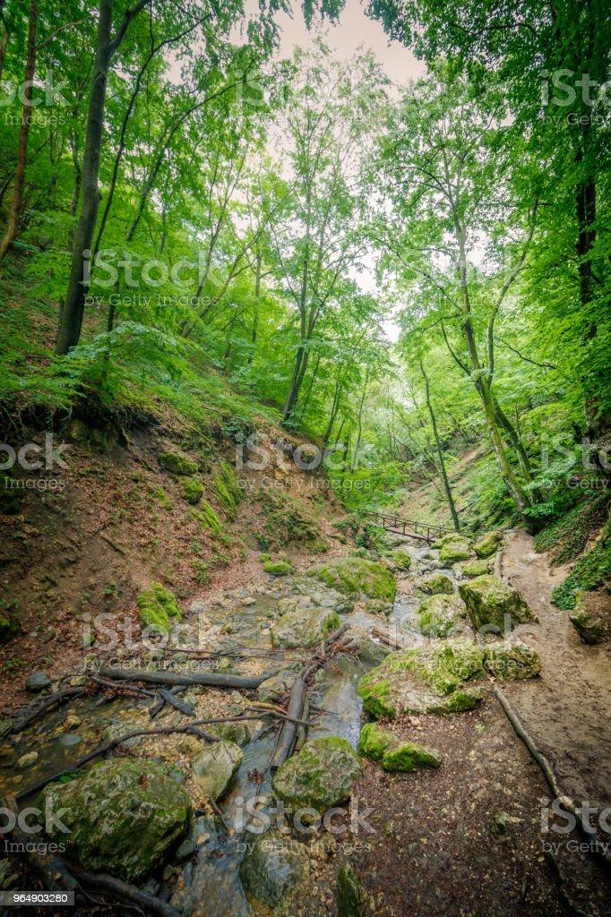 森林在匈牙利 - 免版稅匈牙利圖庫照片
