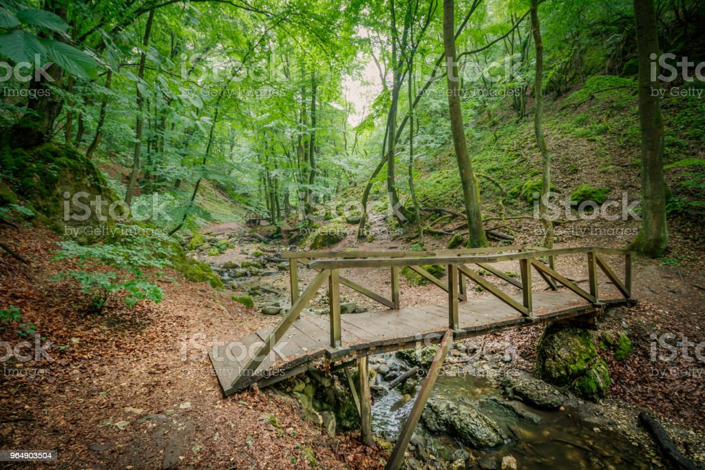 Forest in Hungary royalty-free stock photo