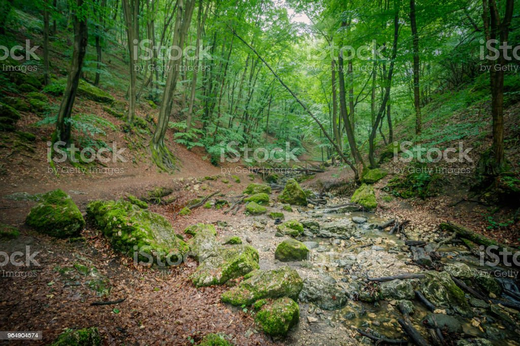 Forest in Hungary - Royalty-free Deep Stock Photo
