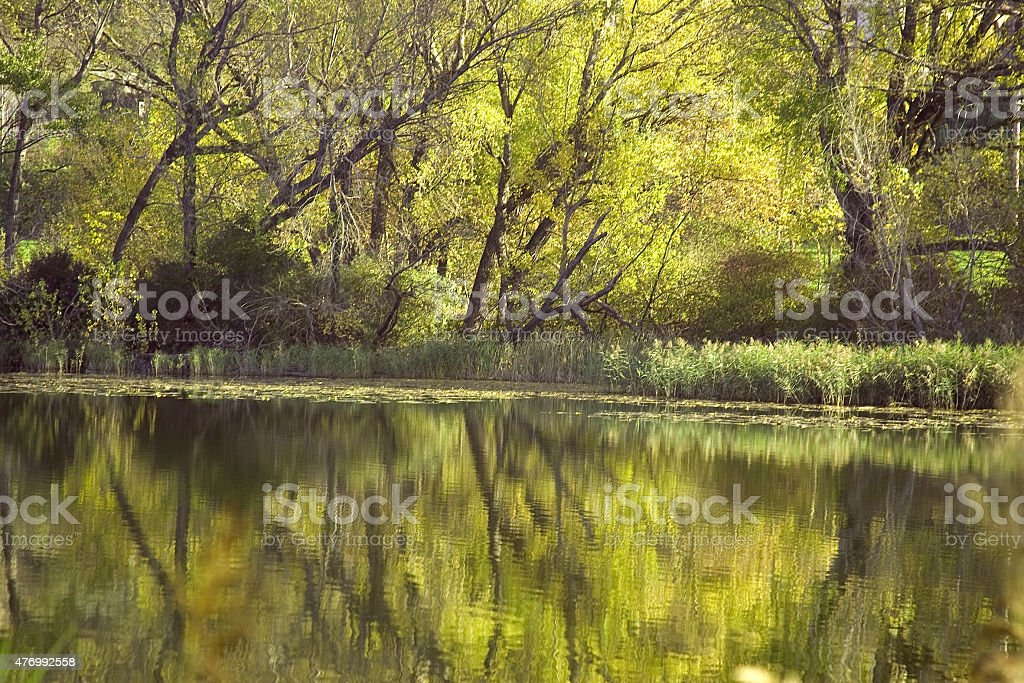 Forest in lake stock photo