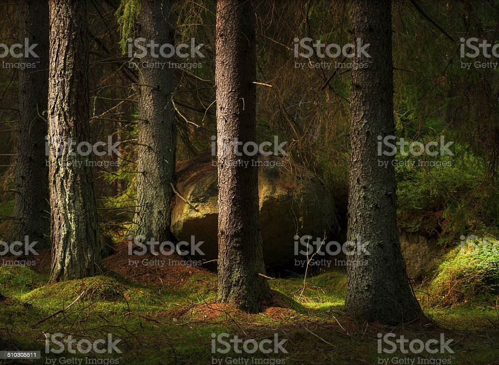 Forest in magic evening light stock photo