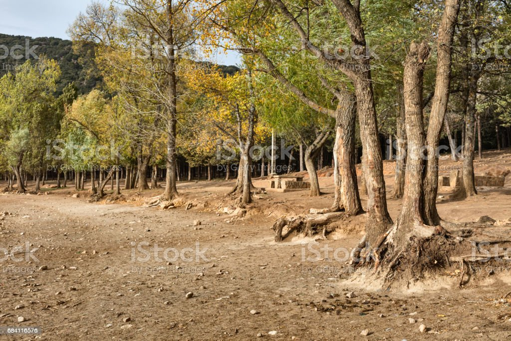 Forest in Middle Atlas stock photo