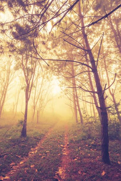wald im nebel - baumwipfelpfad stock-fotos und bilder