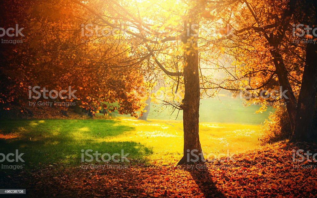 Medium shot of a park showered with sunbeams. One tree is in focus...
