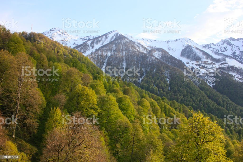 Forest in rays of sun among snowy mountains. royalty-free stock photo