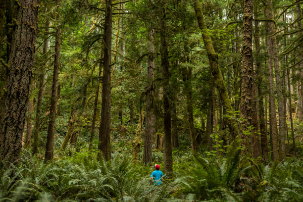 forest in skookumchuck narrows provincial park. - lost stock photos and pictures