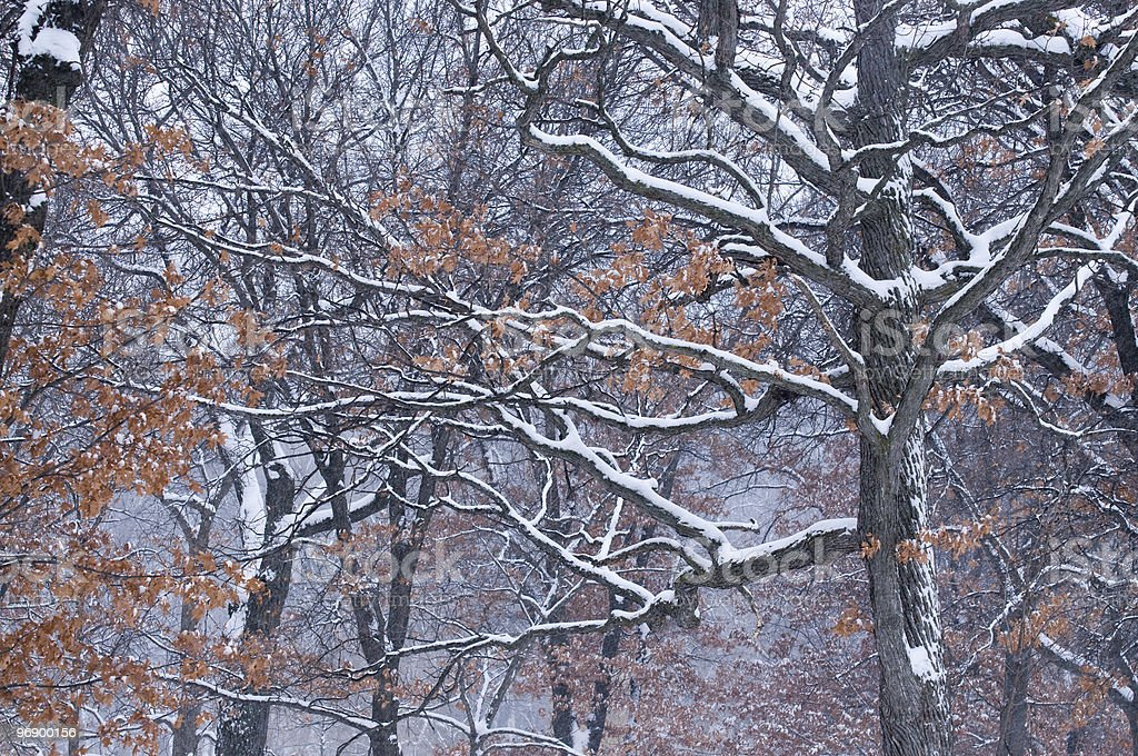 Forest in Snowstorm royalty-free stock photo