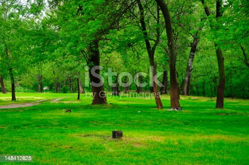 601026242 istock photo forest in spring 148412625