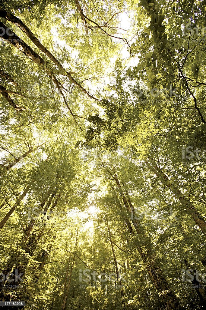 Forest in spring royalty-free stock photo