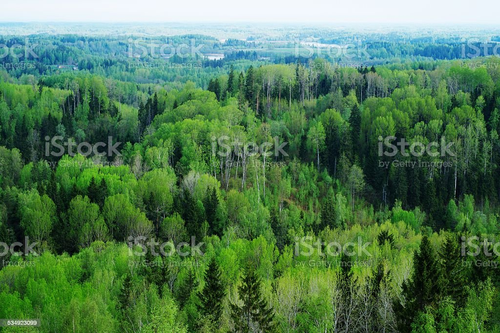 Forest in spring stock photo