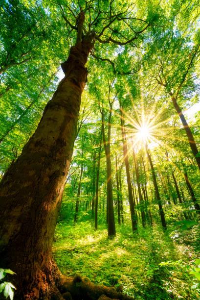 Floresta de primavera - foto de acervo