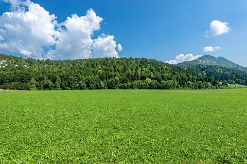 Forest in Summer - Val di Sella (Sella Valley), Trentino Alto Adige Italy