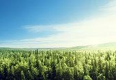 森林サンセットの時間