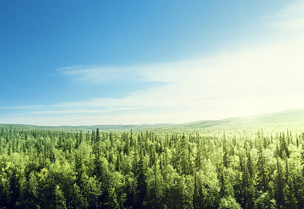 forest in sunset time forest in sunset time horizon over land stock pictures, royalty-free photos & images
