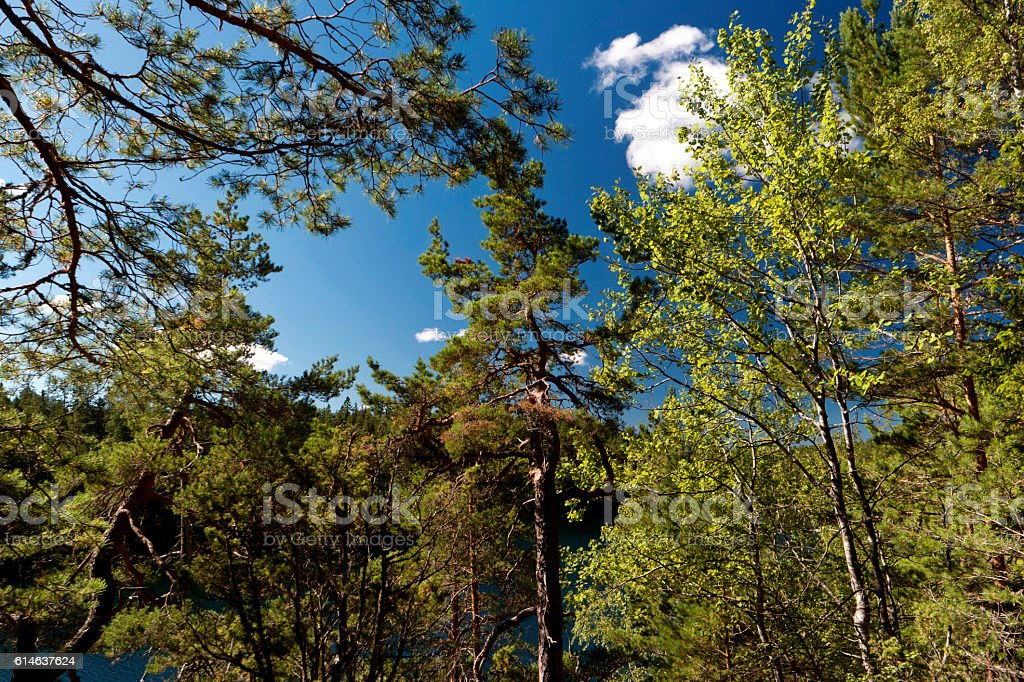 Forest in Sweden stock photo