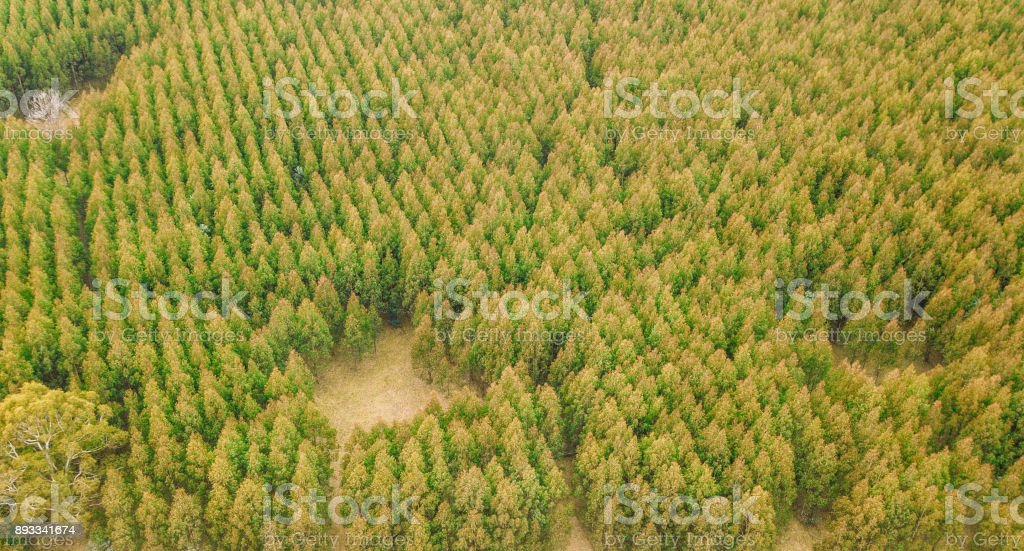 Forest in Tasmania countryside. stock photo