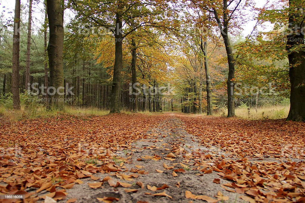 Forest in the autumn royalty-free stock photo