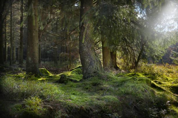 Wald im Gegenlicht – Foto