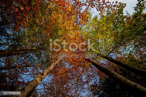 istock forest in the fall 1027546254