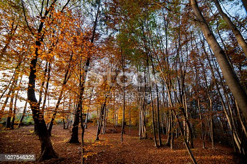 istock forest in the fall 1027546322