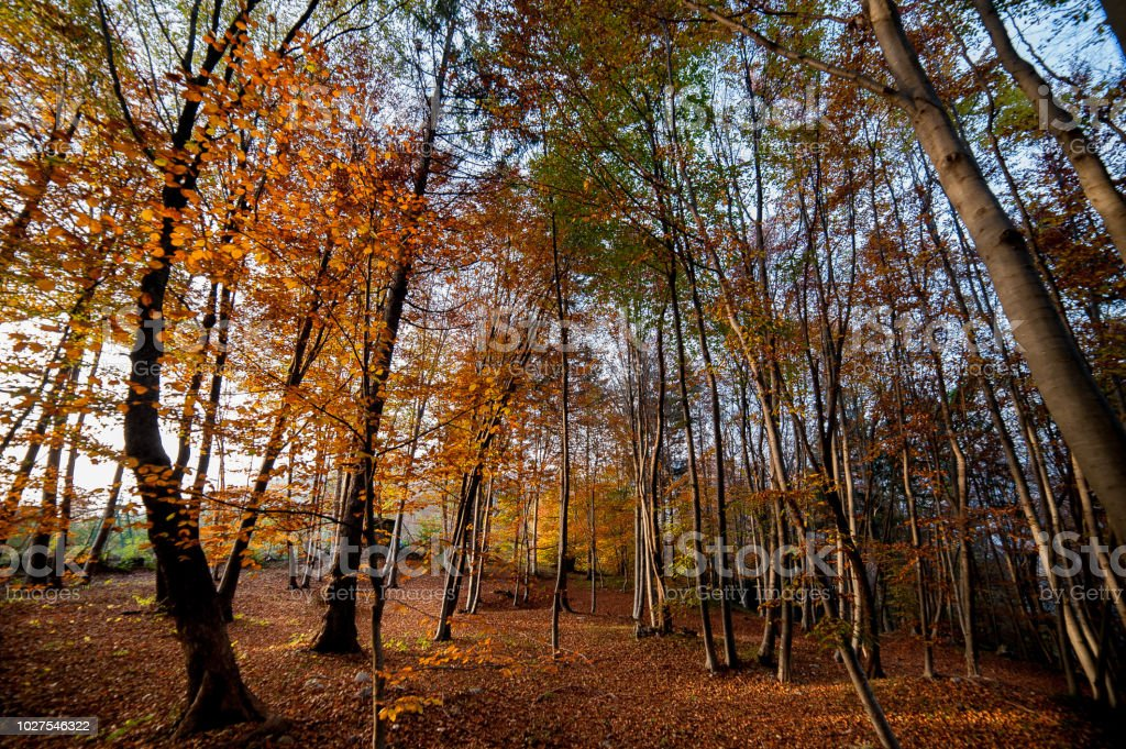 forest in the fall stock photo